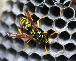 An image of a wasp on a hive.