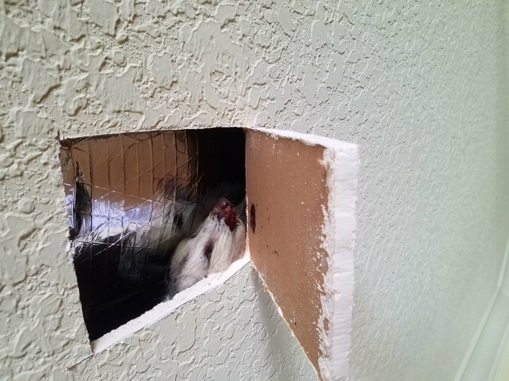 Hole in the wall with a dead animal inside.