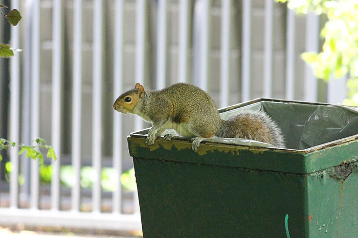 Image of a squirrel on a dumpster.