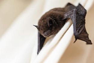 Bat on wall ledge